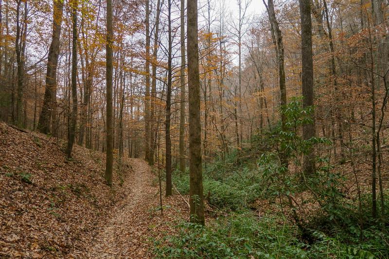 Sycamore Cove Trail -- 2,360'