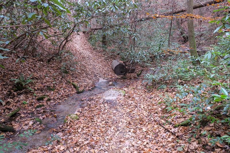 Sycamore Cove Trail -- 2,400'