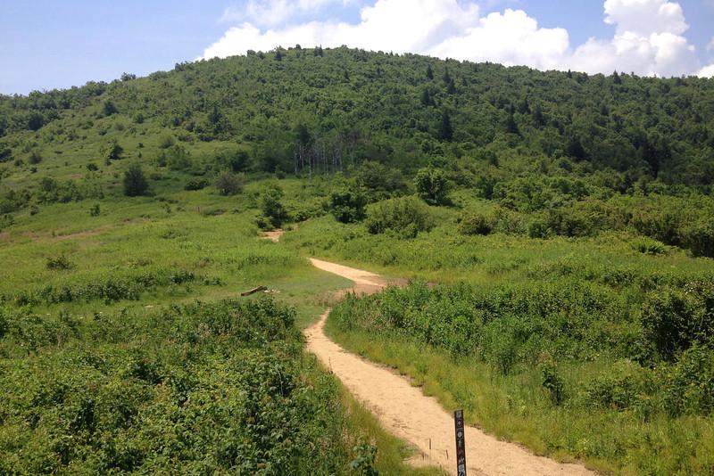 Ivestor Gap-Art Loeb Trail Junction