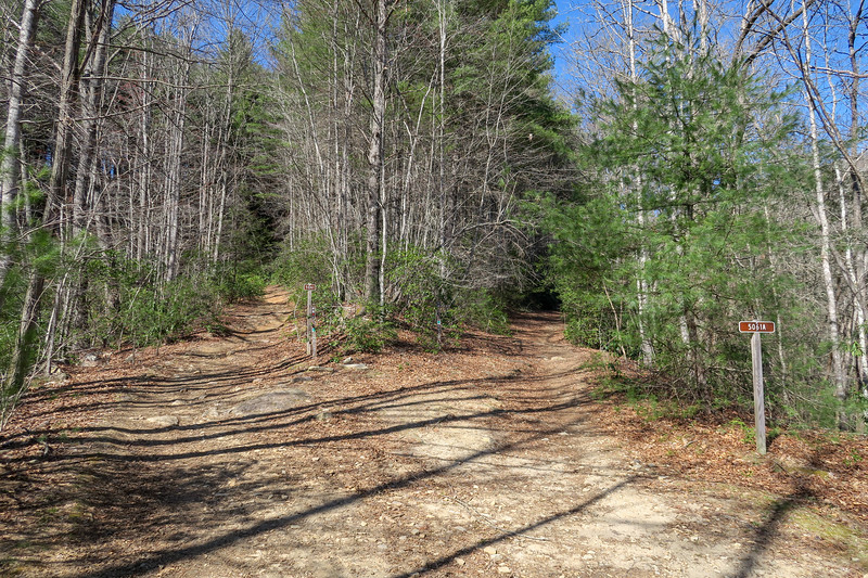 Thrift Cove Trail @ F.R. 5061A (Grassy Road Trail)