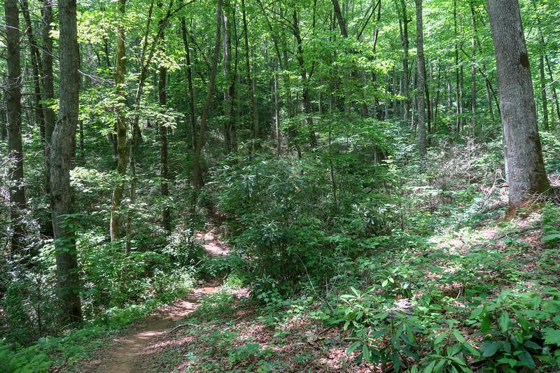 Fletcher Creek Trail -- 2,660'