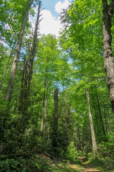Fletcher Creek Trail -- 2,670'