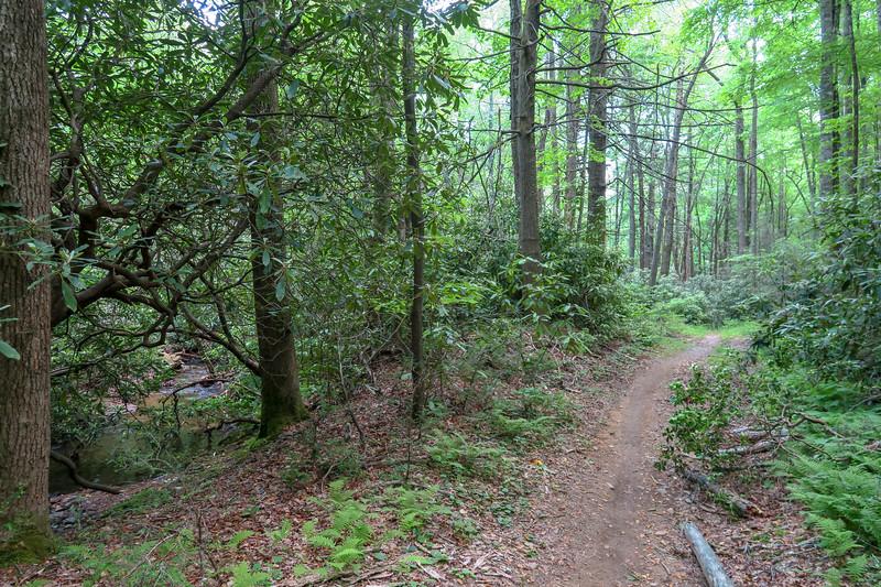 Fletcher Creek Trail -- 2,720'