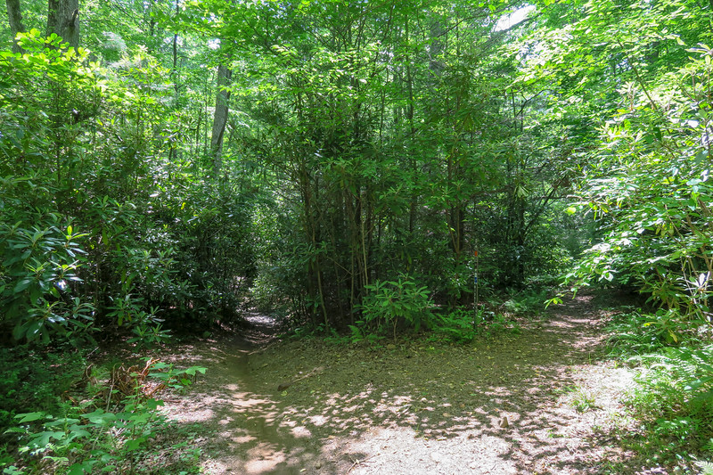 Fletcher Creek-Middle Fork Trail Junction -- 2,610'