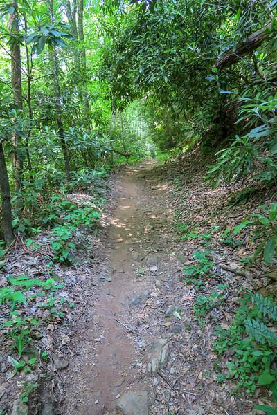 Fletcher Creek Trail -- 2,440'