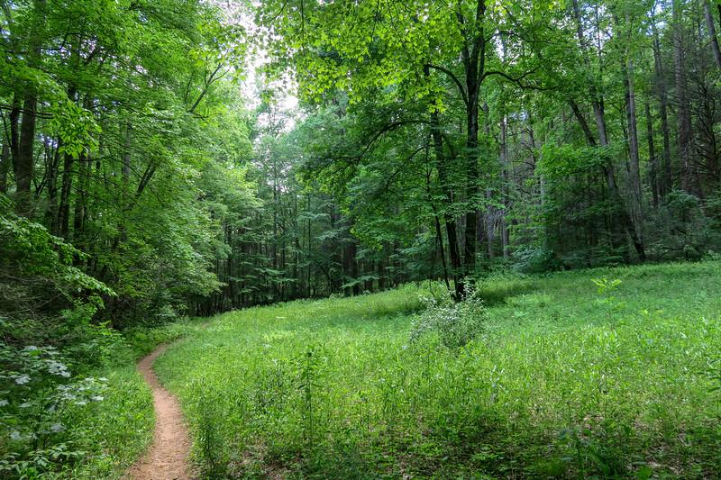 Fletcher Creek Trail -- 2,700'