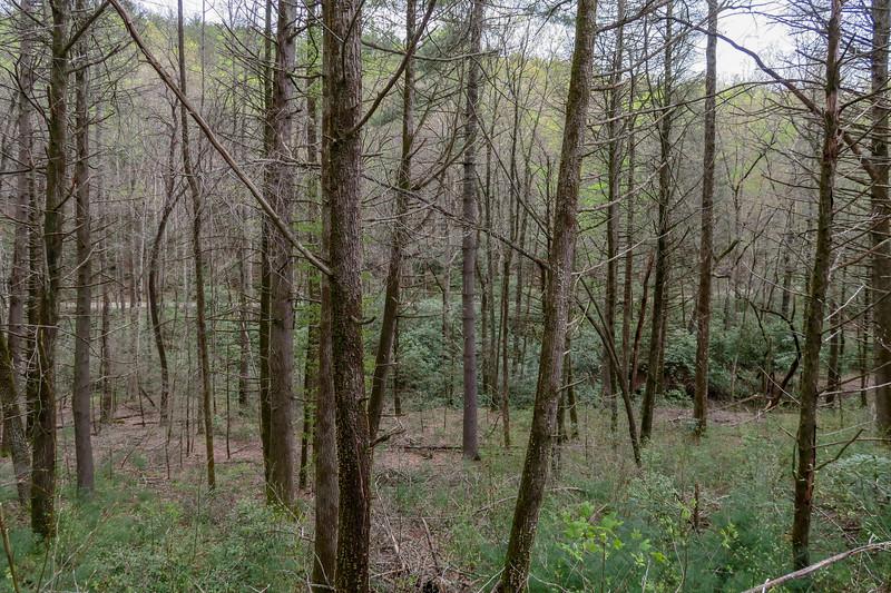 Wash Creek Trail