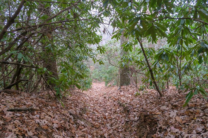 Turkeypen Gap Trail -- 3,250'