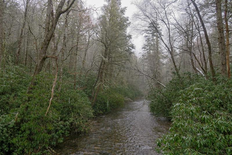 South Fork Mills River -- 2,400'