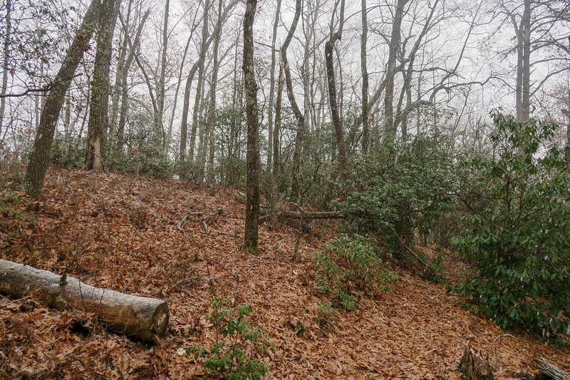 Turkeypen Gap Trail -- 3,120'