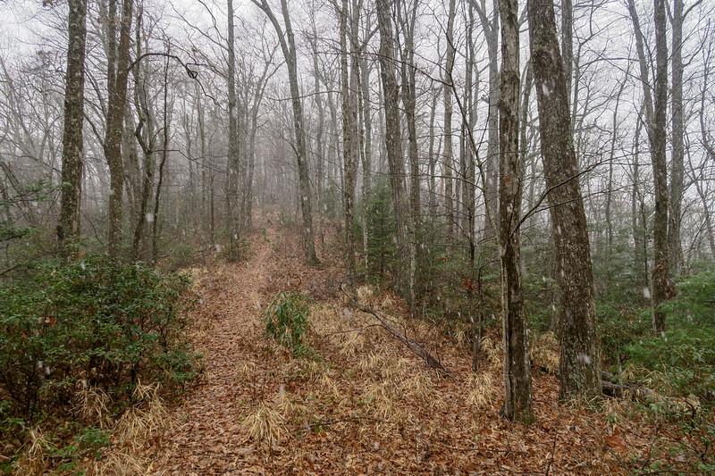 Turkeypen Gap Trail -- 3,040'