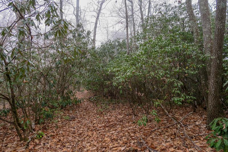 Turkeypen Gap Trail -- 3,000'