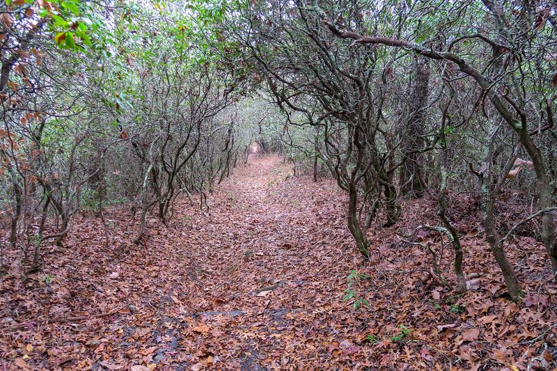 Turkeypen Gap Trail -- 2,800'