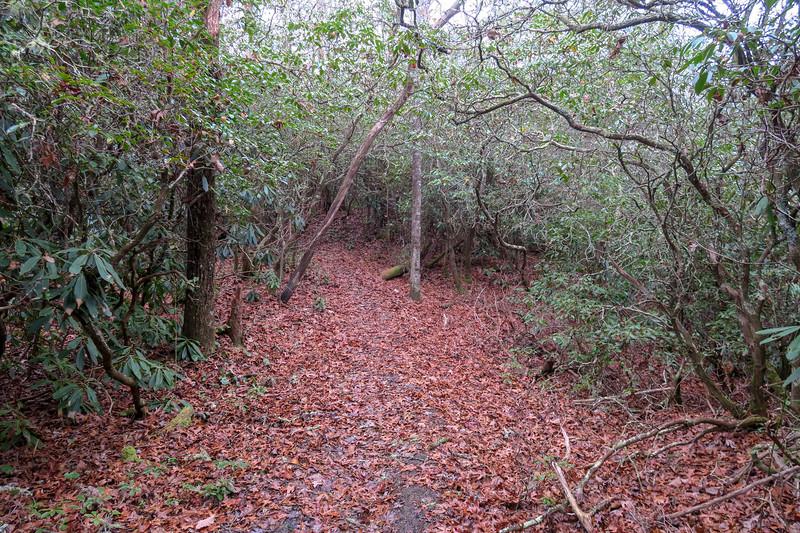 Turkeypen Gap Trail @ Simpson Gap -- 2,750'