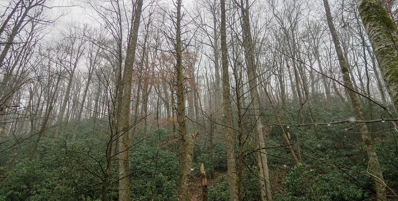 Wagon Road Gap Trail -- 2,750'