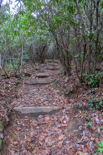 Turkeypen Gap Trail -- 2,750'