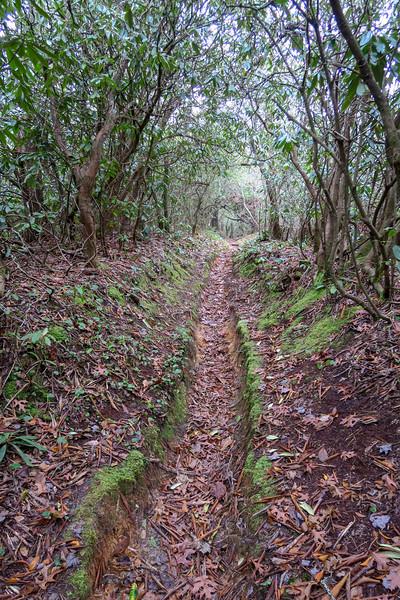 Turkeypen Gap Trail -- 2,780'