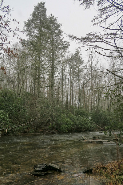 South Fork Mills River -- 2,440'