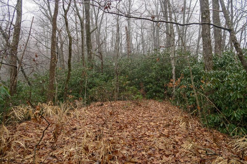 Turkeypen Gap Trail @ Sandy Gap -- 2,980'