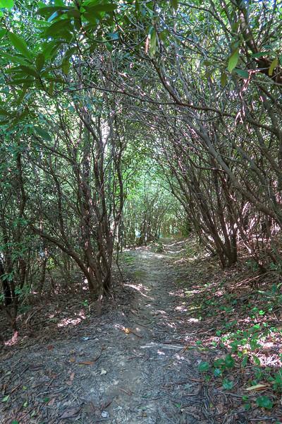 Turkeypen Gap Trail -- 2,690'