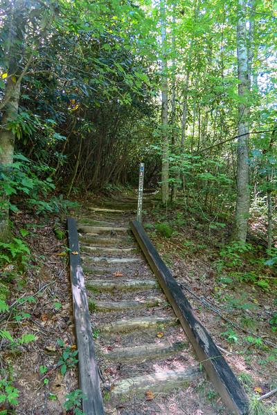 Turkeypen Gap Trail @ Turkey Pen Trailhead -- 2,650'