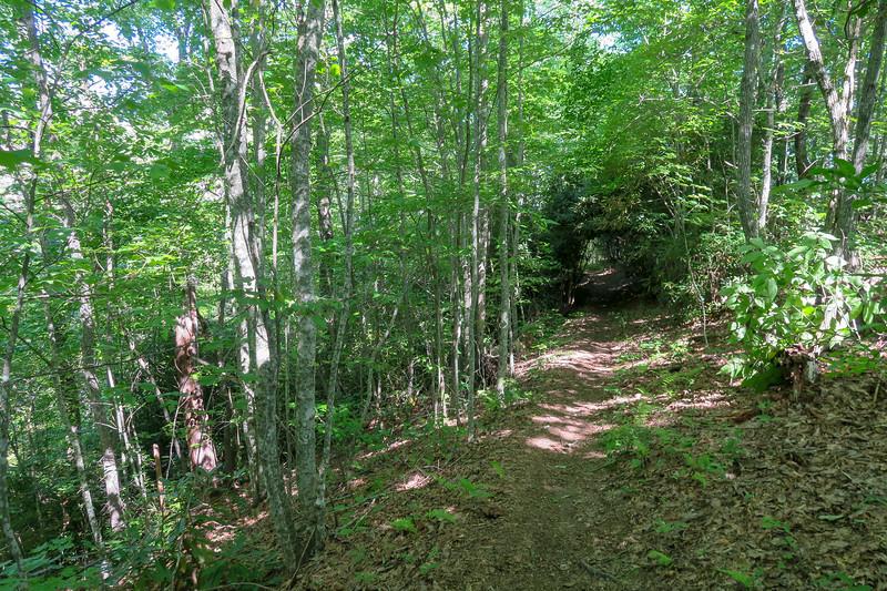Turkeypen Gap Trail -- 2,850'