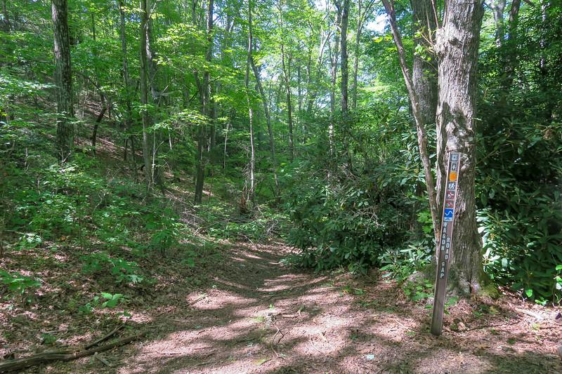 Turkeypen Gap/Wagon Road Gap Trail Junction -- 3,020'
