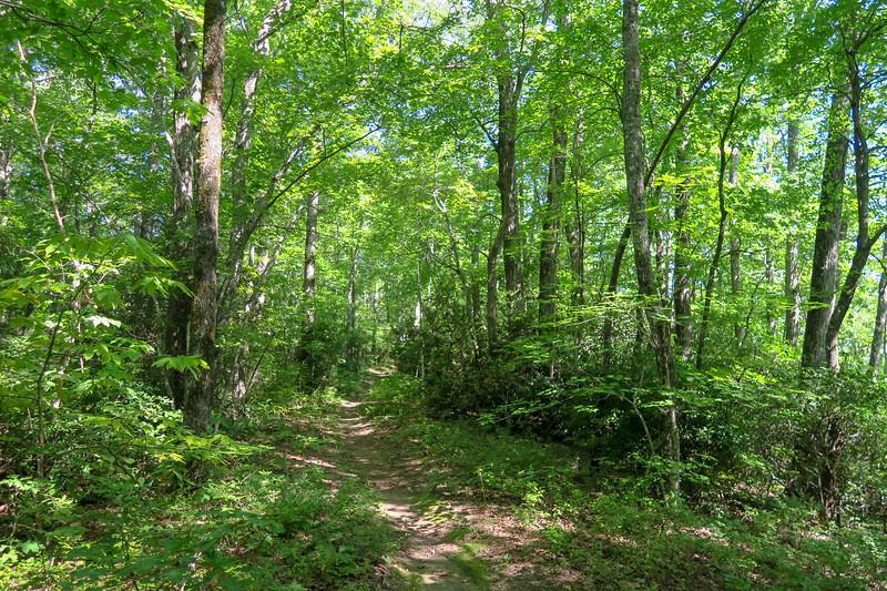 Turkeypen Gap Trail -- 2,900'