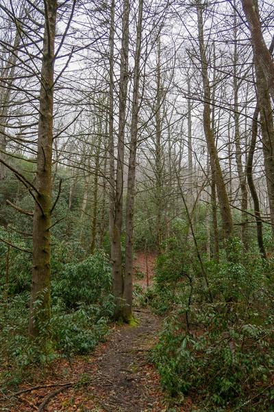 Avery Creek Trail -- 2,560'