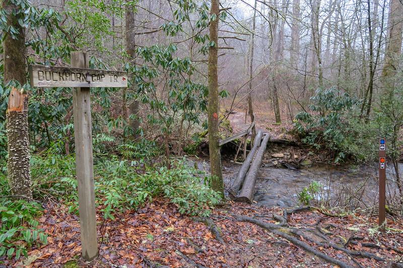 Avery Creek-Buckhorn Gap Trail Upper Junction -- 2,580'