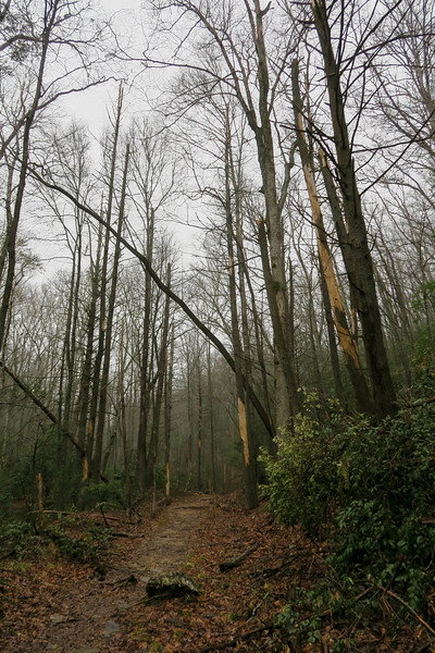 Buckhorn Gap Trail -- 2,590'