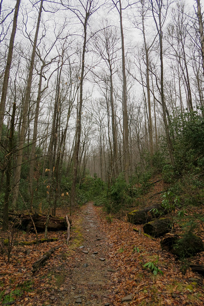 Buckhorn Gap Trail -- 2,680'