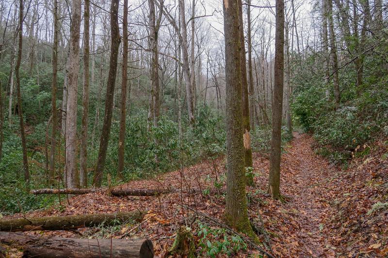 Avery Creek Trail -- 2,490'