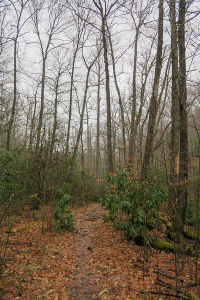 Avery Creek Trail -- 2,460'