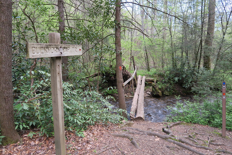 Avery Creek - Buckhorn Gap Trail Junction