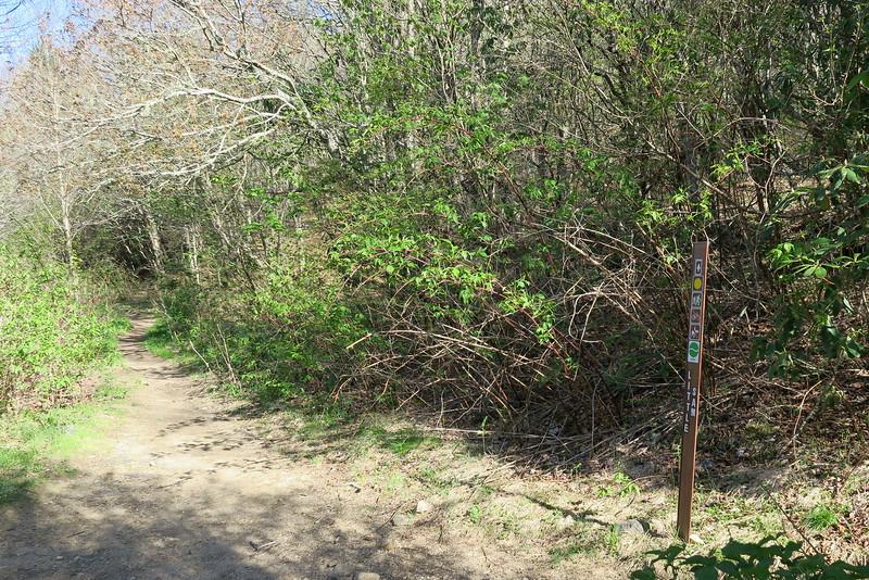 Flat Laurel Creek-Little Sam Trail Junction - 5,550'