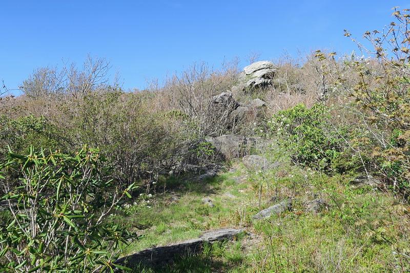 Sam Knob Summit Trail - 5,900'