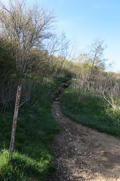 Sam Knob-Sam Knob Summit Trail Junction - 5,650'