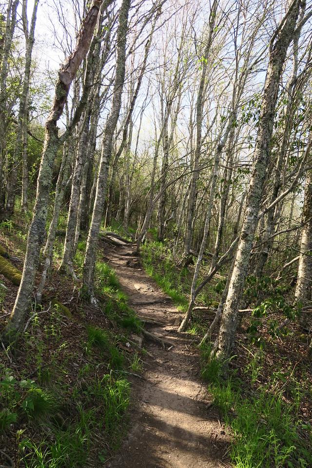 Sam Knob Summit Trail - 5,700'