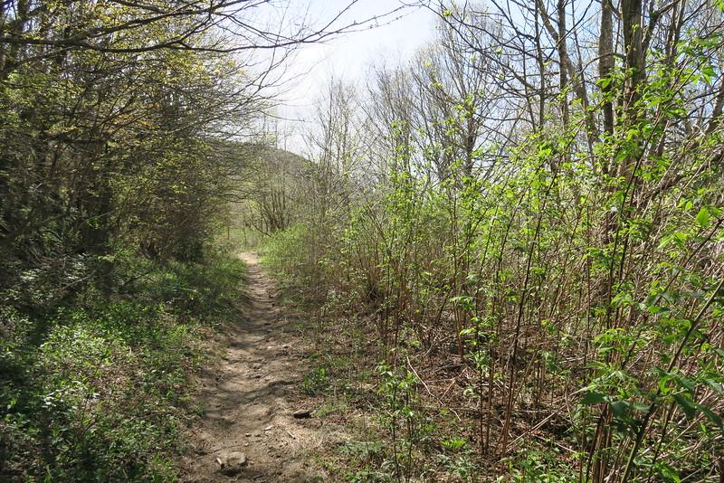 Flat Laurel Creek Trail - 5,500'