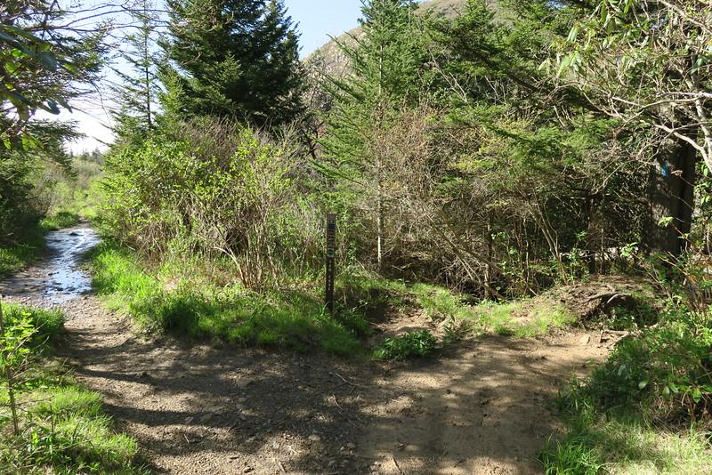 Flat Laurel Creek-Sam Knob Trail Junction - 5,400'