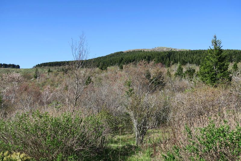 Flat Laurel Creek Trail - 5,700'