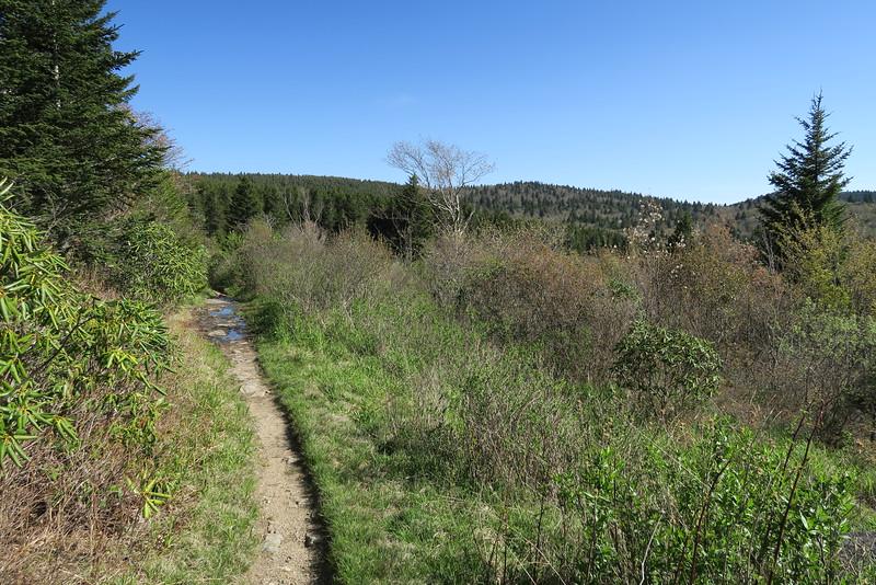 Flat Laurel Creek Trail - 5,780'