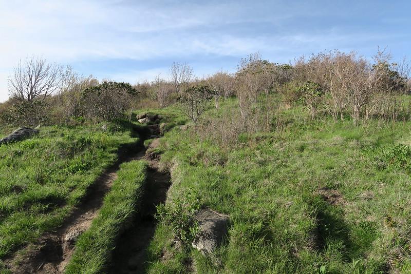 Sam Knob Summit Trail - 6,030'