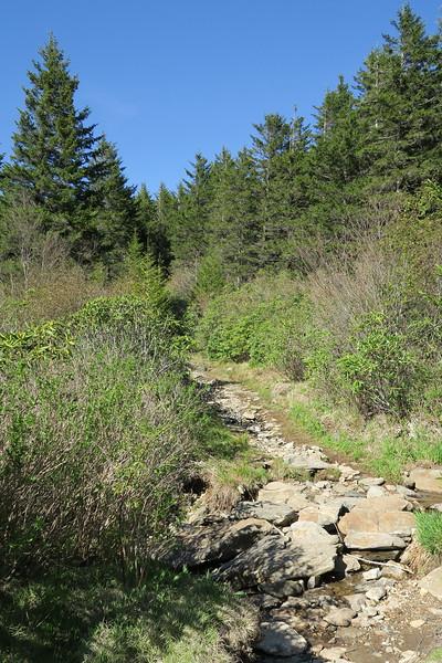 Flat Laurel Creek Trail - 5,720'