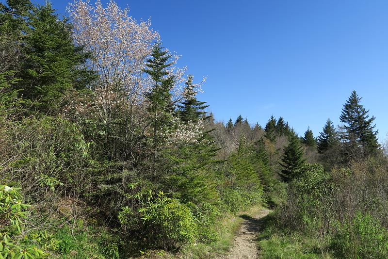 Flat Laurel Creek Trail - 5,800'