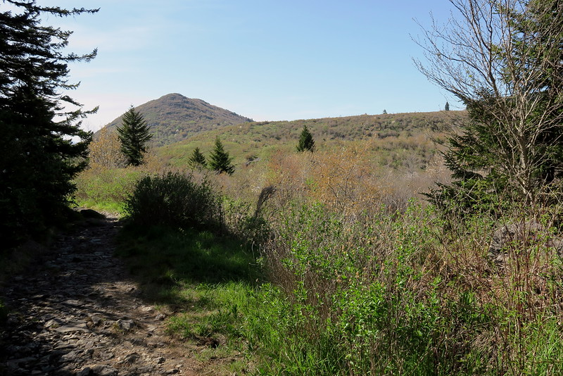 Flat Laurel Creek Trail - 5,600'