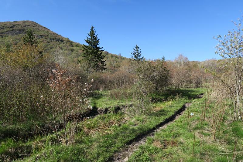 Sam Knob Trail - 5,450'