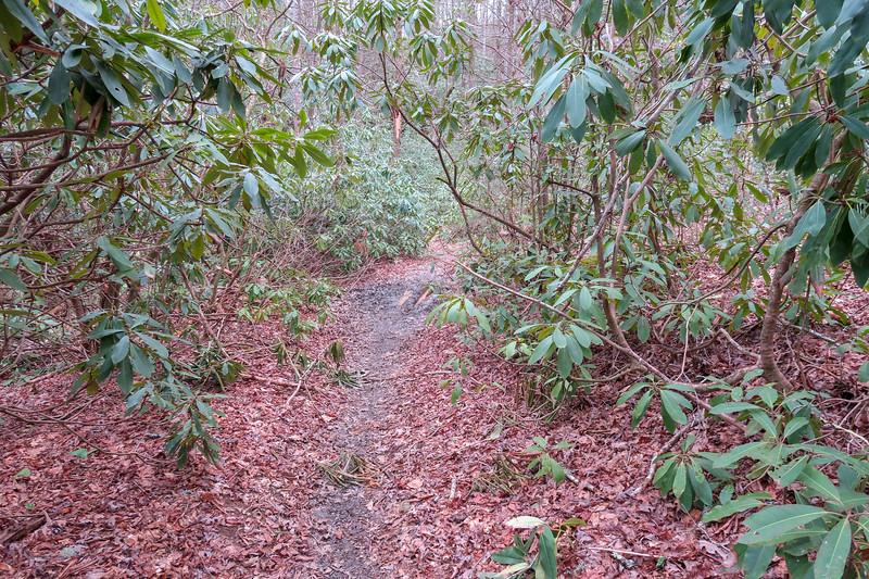 Bradley Creek Trail -- 2,560'