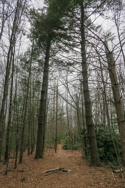 Vineyard Gap Trail -- 2,780'